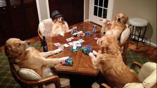 Perros Poker