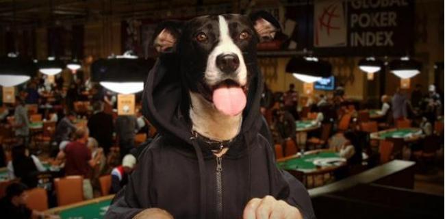 El Perrito Lucy nos sirve para vernos cuando comemos en las mesas de poker