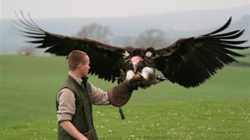 falconiere malta