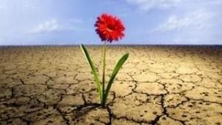 Flor desierto