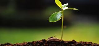 Nacimiento de una planta