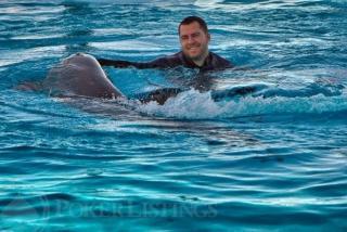 Dan Cates dauphins2