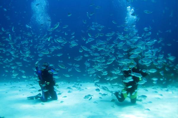 Buceo y submarinismo en Malta
