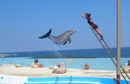 Delfines en Malta